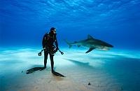 Где встретить акул под водой. 5 вариантов для бесстрашных
