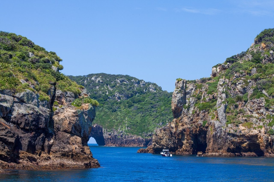 POOR KNIGHTS ISLANDS, NEW ZEALAND